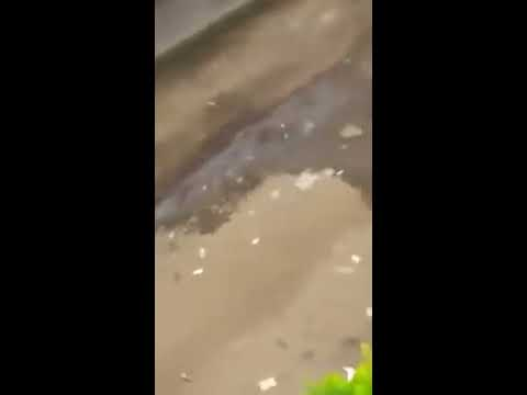 Violences policieres à l'université de Buea au Cam