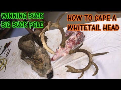 DIY How to Cape a Trophy Whitetail Deer Head for Mounting (видео)