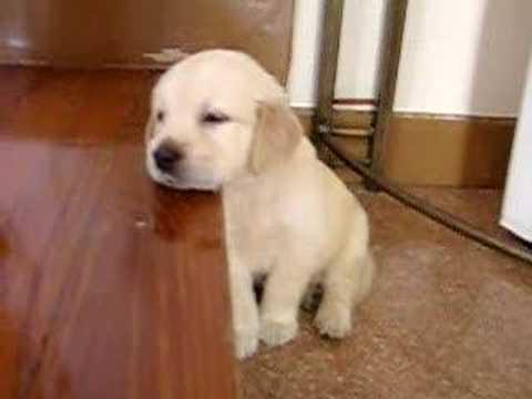 Cachorro con sueño