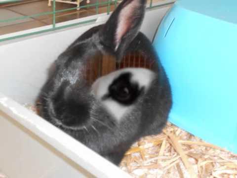 mijn konijnen filmpje