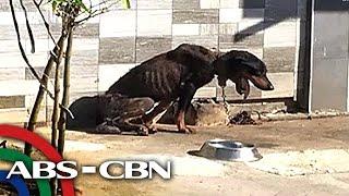 Pinukol ng batikos ng netizens ang isang larawan na ipinost sa Facebook na nagpapakita ang isang payat na aso na nakakadena at nakabilad sa araw sa ...