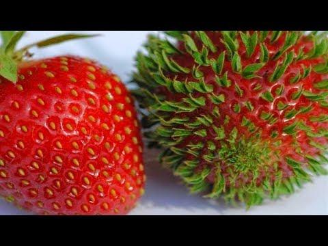 Что происходит когда фрукты и овощи начинают прорастать раньше времени - DomaVideo.Ru
