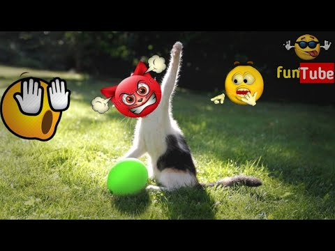 Cat vs balloons funny cat videos  try to not laugh funTube