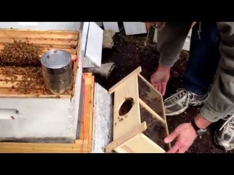 Beekeeping for beginners 1 – installing our first package. Not my brightest moment