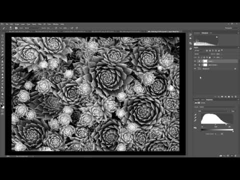 Bring a Black & White Photo to Life in One Step - Nature Photo Guides