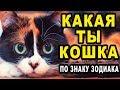 Какая Ты Домашняя Кошка по Знаку Зодиака