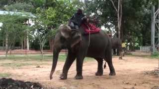 Ban Ta Klang - Elephant Village