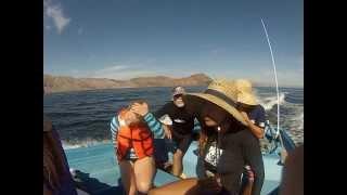 Marine Biology trip to Bahia de Los Angeles 2013
