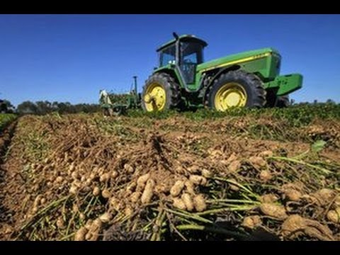 Peanut Harvesting v1.0