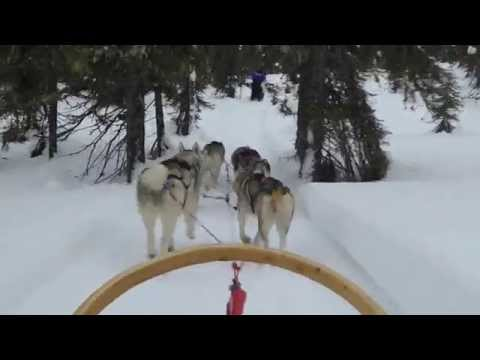 Husky Safari Trough Wonderful Lapland - Finland (20-2-2015)