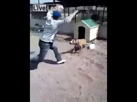 nghịch ngu version trêu chó :))