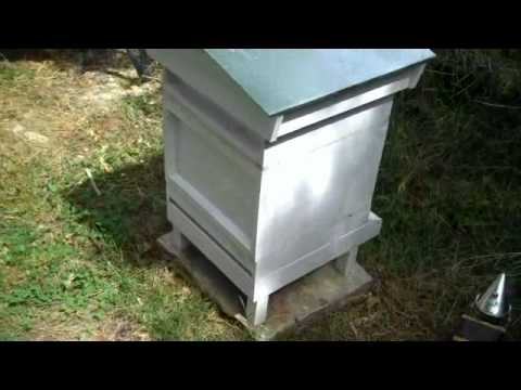Beehive comparisons, a beginners perspect
