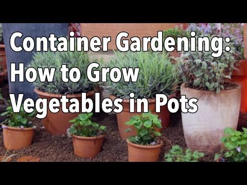 gardening - Whether you're planning to grow a small kitchen herb garden, or to produce enough food to feed your family, containers can add the flexibility which helps ma...