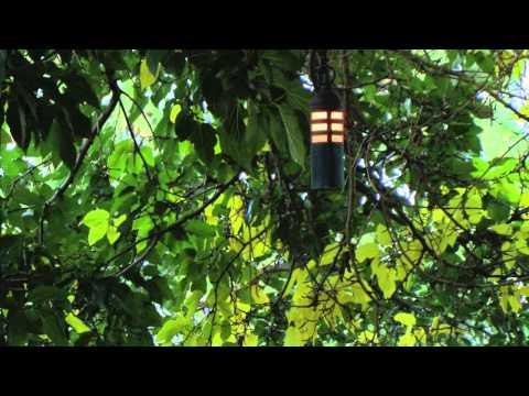 Hanging Tree Fixtures