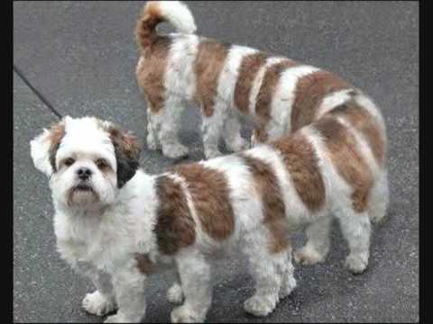 Scary Animals