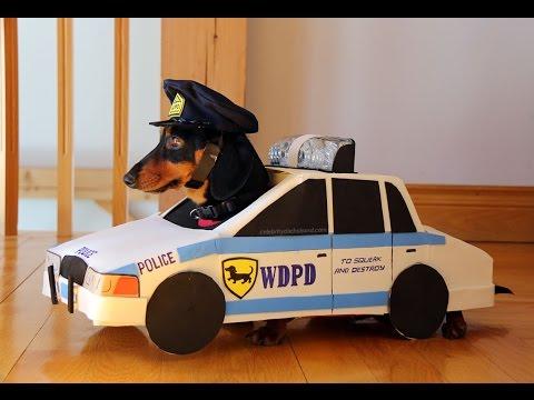 狗狗扮演警車追賊人,這場面笑死人了!