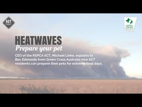 Prepare your pet for a heatwave