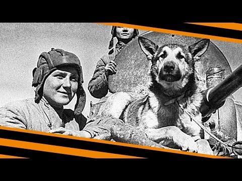 Собаки - герои Великой Отечественной Войны!