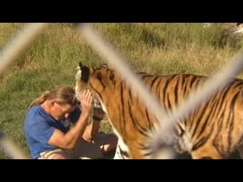 It's International Tiger Day! To celebrate, here's three videos of people who might be a little too excited.