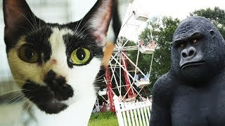 Alex's rescue from carnival of cruelty by The Humane Society of the United States