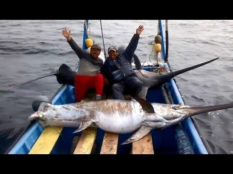 Săn bắt cá kiếm khổng lồ một trong những loài cá đắt nhất thế giới
