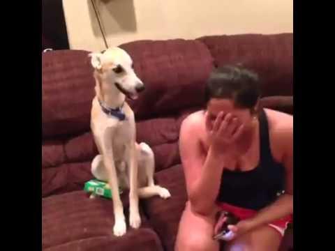 cane che se la ride!!