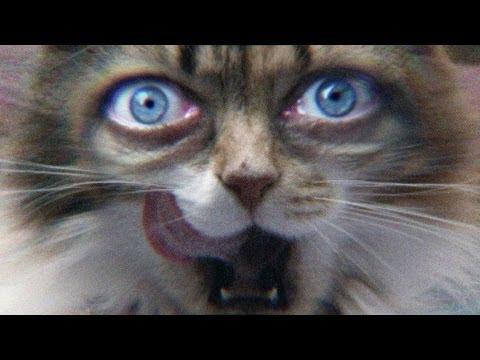 讓人愈看愈毛骨悚然的貓眼…很適合鬼月看…