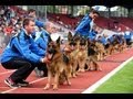Schäferhunde-WM im Auestadion Kassel mit George Foreman