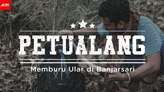 Video Sang Petualang - Memburu Ular Di Banjarsari MP3, 3GP, MP4, WEBM, AVI, FLV November 2018