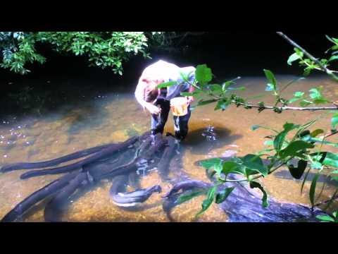 Ženska nahrani jegulje