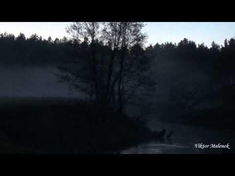 Смеркалось. Туман. Река. Пение птиц. Природа. Релакс. Медитация