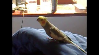 Funny Animals And Fails 2013