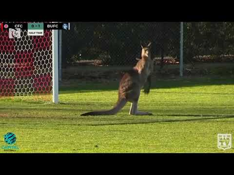 Kangaroo invades Australian football match