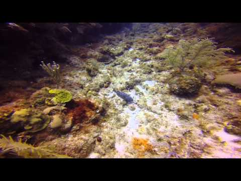 Roatan Dive Trip 14-Jul-14