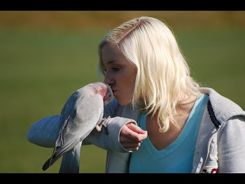 Talkative Galah