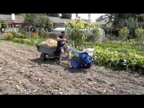 recolte pomme de terre 2012