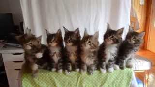 These Seven Synchronized Kittens Will Make You Smile. Guaranteed!