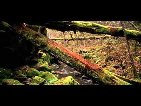 Naturreservat Film03