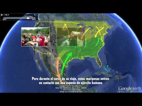 Viajes en Google Earth: migración de las mariposas monarca: