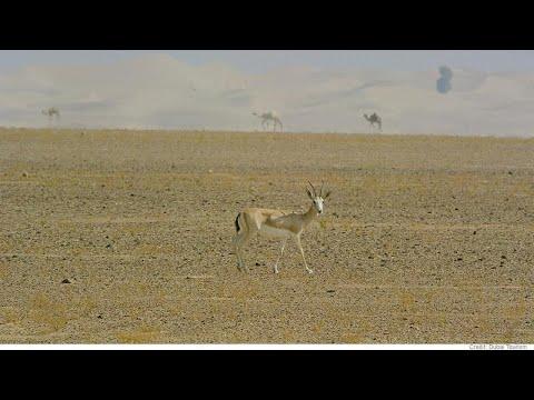 Οάσεις και καταφύγια άγριων ζώων στο Ντουμπάι