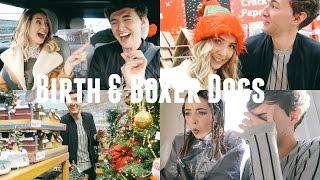 Video BIRTH & BOXER DOGS MP3, 3GP, MP4, WEBM, AVI, FLV Juli 2018
