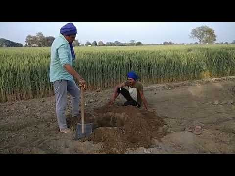 Trending Nakhra Amrit Maan Funny Video