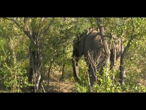 Elephant Eating Habit In Africa Natural Life Part I