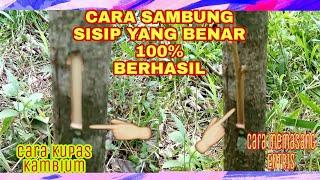 Video Cara Sambung Sisip Pada Batang Pokok Tanaman Durian MP3, 3GP, MP4, WEBM, AVI, FLV Oktober 2018