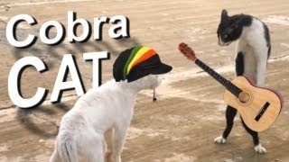 Video COBRA CAT - PAROLE DE CHAT MP3, 3GP, MP4, WEBM, AVI, FLV Mei 2018