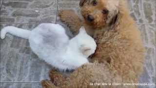 Un chat tète un chien. Si si, regardez cette vidéo !
