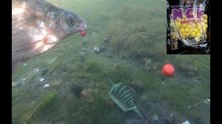 подводная съем ловли окуня