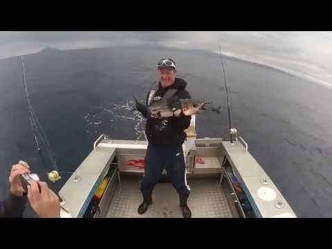 國外一名釣客釣到大鮪魚準備來個合照,卻沒想到被牠….