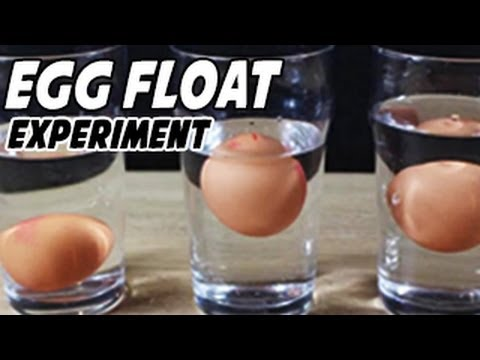 Egg Floating in Saltwater Experiment (видео)