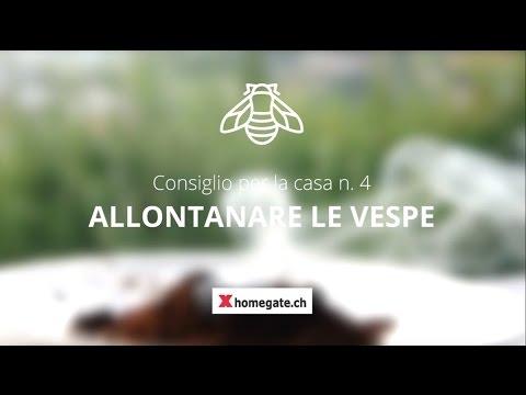 come tenere lontane le vespe